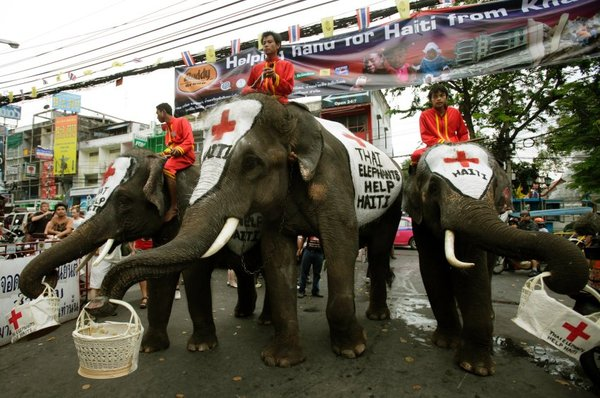 Elephant Charity